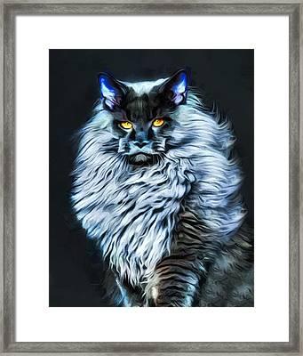Moonlight Main Coon Cat Framed Print by Scott Wallace