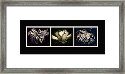 Moonlight Petals Triptych Framed Print by Jessica Jenney