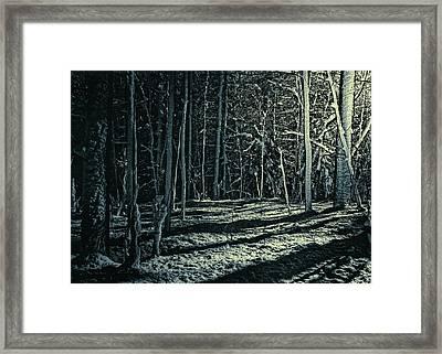 Moonlight Through The Trees Framed Print by Bob Orsillo