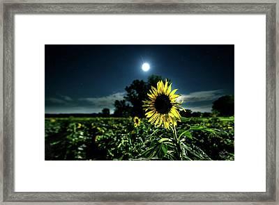 Moonlighting Sunflower Framed Print by Everet Regal