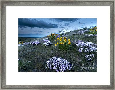 Moonrise Over Snow Mountain Ranch Framed Print by Mike Dawson