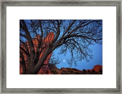 Moonset In The Garden Framed Print by Darren White