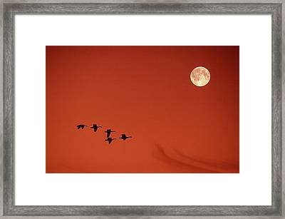 Moonset Framed Print by Tony Beck