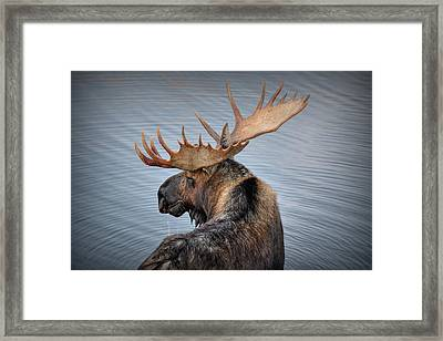 Moose Drool Framed Print by Ryan Smith