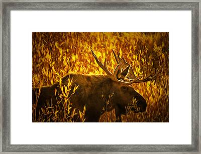 Moose In Willows Framed Print by Mark Kiver