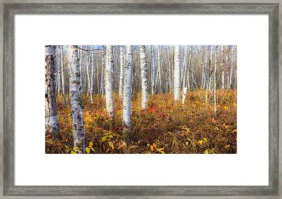 More To The Under-story Framed Print by Mary Amerman