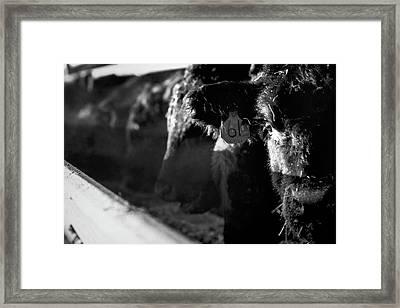 Morning Breath Framed Print by Thomas Zimmerman