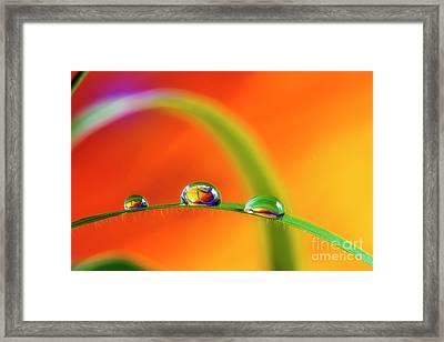 Morning Dewdrops Framed Print by Veikko Suikkanen
