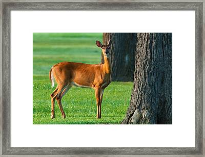 Morning Encounter Framed Print by James Marvin Phelps