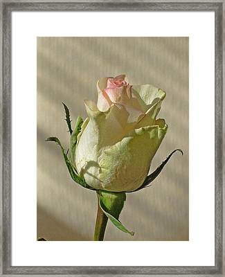 Morning. Flower. Framed Print by Andy Za