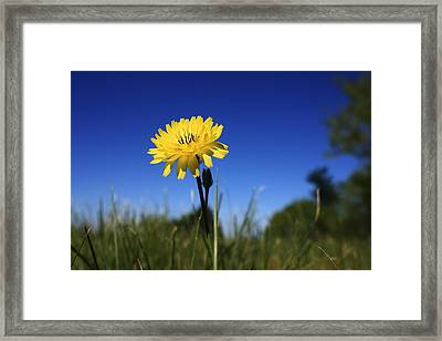 Morning Flower Framed Print by Gulf Island Photography and Images