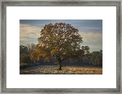 Morning Frost Framed Print by Chris Fletcher