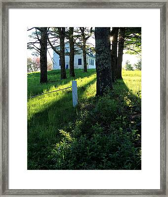 Morning Glory Framed Print by Laurie Breton