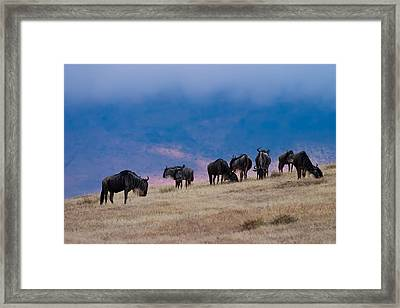 Morning In Ngorongoro Crater Framed Print by Adam Romanowicz