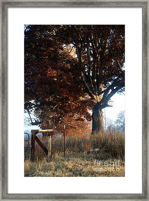 Morning In Tennessee Framed Print by Amanda Barcon