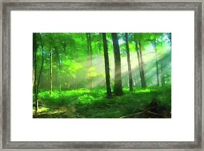 Morning In The Forest Framed Print by Gary Grayson