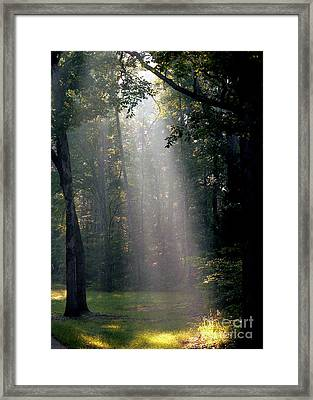 Morning Light Framed Print by David Bearden