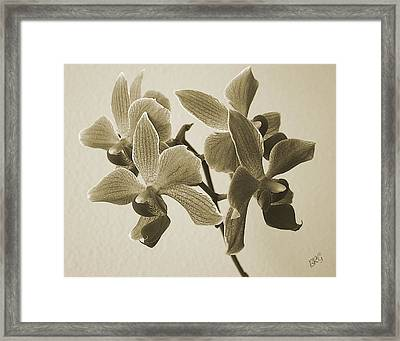 Morning Orchid Framed Print by Ben and Raisa Gertsberg
