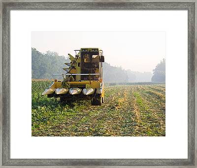Morning Picking Framed Print by Tim Fitzwater