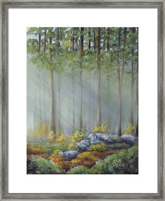 Morning Rays Framed Print by Debra Davies