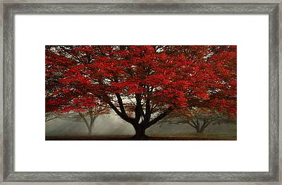 Morning Rays In The Forest Framed Print by Ken Smith
