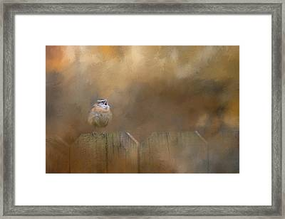 Morning Song Framed Print by Jai Johnson