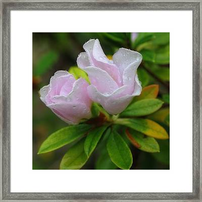 Morning Surprise Framed Print by Richard Rizzo