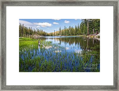 Mosquito Lake Reflections 2 Framed Print by Dianne Phelps
