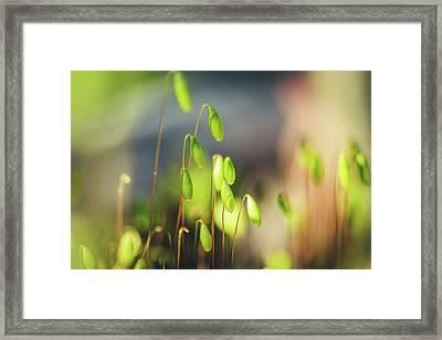 Moss Framed Print by Cindy Grundsten