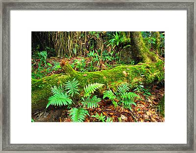 Moss On Fallen Tree And Ferns Framed Print by Thomas R Fletcher