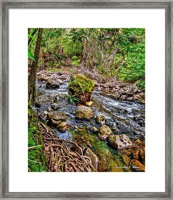 Mossy Boulder Framed Print by Christopher Holmes