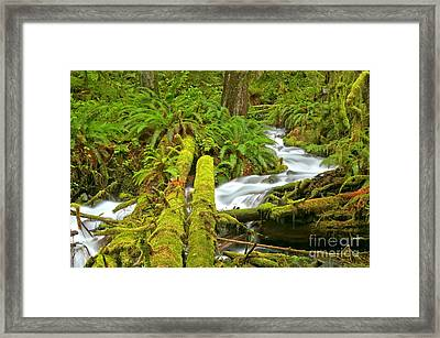Mossy Forest Logs Framed Print by Adam Jewell