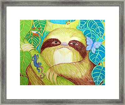 Mossy Sloth Framed Print by Nick Gustafson