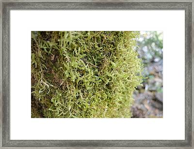 Mossy Trunk Framed Print by Charlaina Swinney