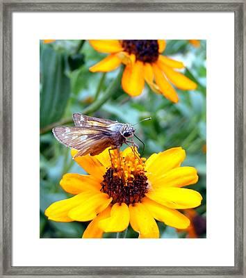Moth  Framed Print by D R TeesT