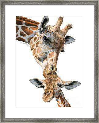 Mother And Baby Giraffe Framed Print by Sarah Batalka