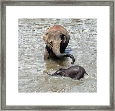 Mother And Baby Framed Print by Jane Rix