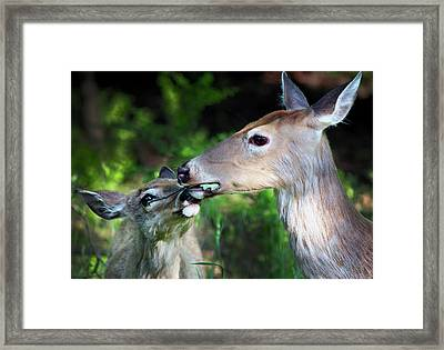 Mother Deer With Fawn Framed Print by Codee Hart