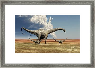 Mother Diplodocus Dinosaur Walks Framed Print by Corey Ford