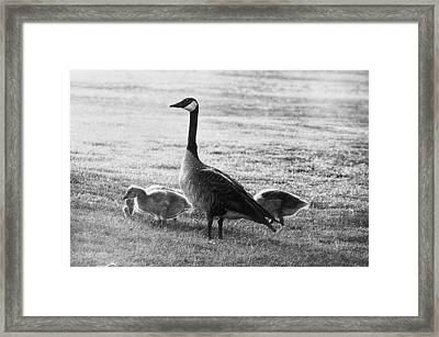 Mother Goose Framed Print by Camille Lopez
