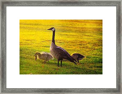 Mother Goose Color Framed Print by Camille Lopez
