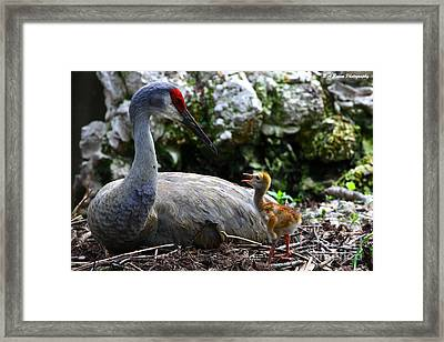 Mother Listening Framed Print by Barbara Bowen