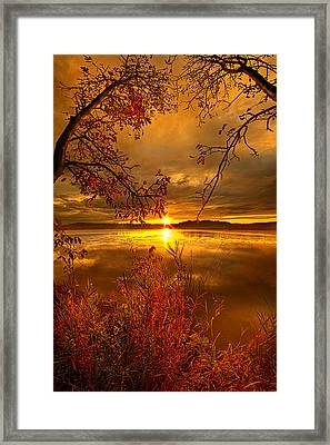 Mother Nature's Son Framed Print by Phil Koch