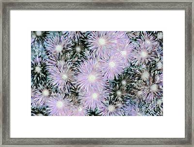 Mother Of Pearl Daisies By Kaye Menner Framed Print by Kaye Menner