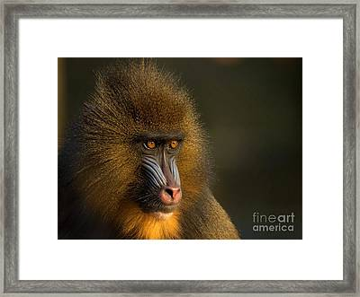 Mother's Finest Framed Print by Jacky Gerritsen