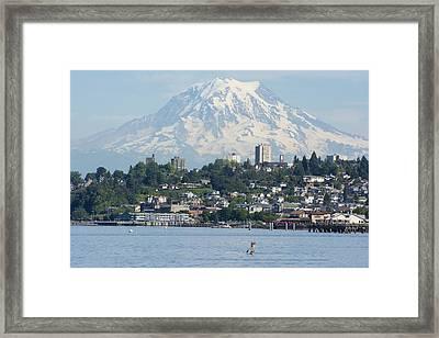 Mount Rainier From Ruston Way Framed Print by Matt McDonald