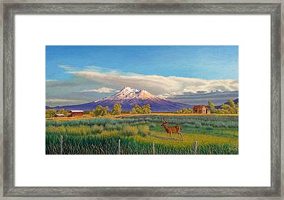 Mount Shasta Framed Print by Paul Krapf
