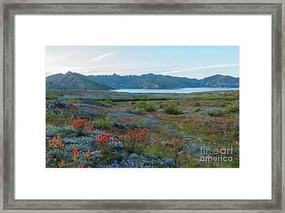 Mount St Helens Spirit Lake Fields Of Spring Wildflowers Framed Print by Mike Reid