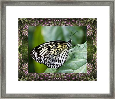 Mountain Butterfly Framed Print by Bell And Todd
