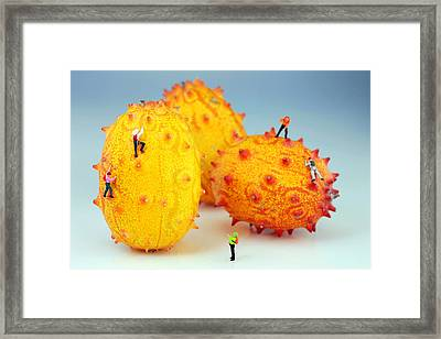 Mountain Climber On Mangosteens Framed Print by Paul Ge